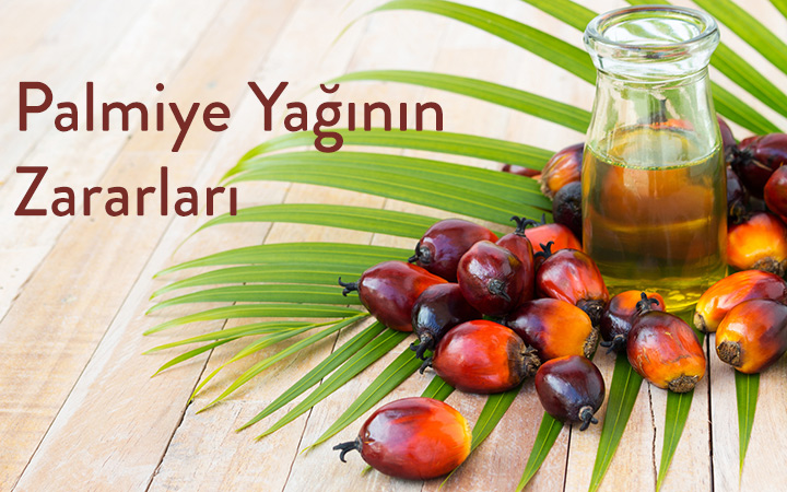 Palm Yağı Nedir ? Palmiye Yağı Zararları Nelerdir?