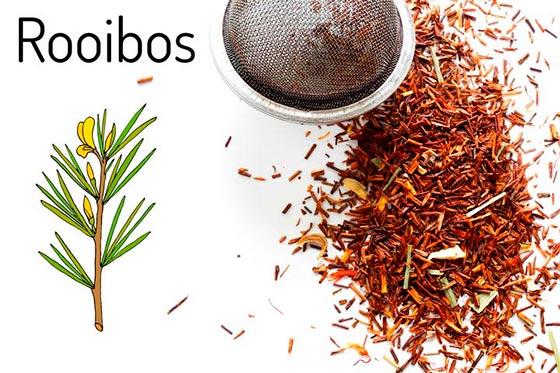 rooibos_3 Zayıflama Çayları İsimleri ve Tarifleri