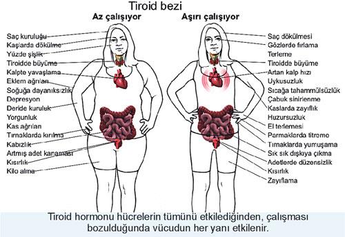 fft16_mf2116139 Tiroid Hastaları İçin Beslenme Önerileri