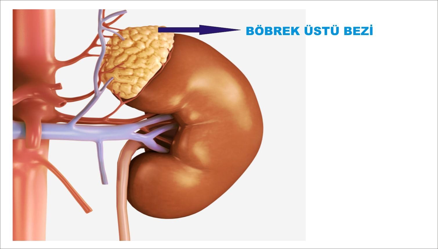 selmasultan-bobrek-ustu-bezleri-surrenal-bez-nedir-hastaliklari-belirtileri-tedavisi Kilo Aldıran Hastalıklar Nelerdir?