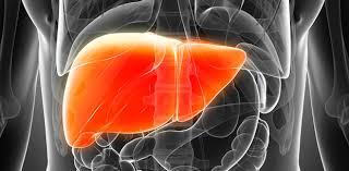 images Karaciğer Yağlanması Belirtileri, Tedavisi ve Diyeti