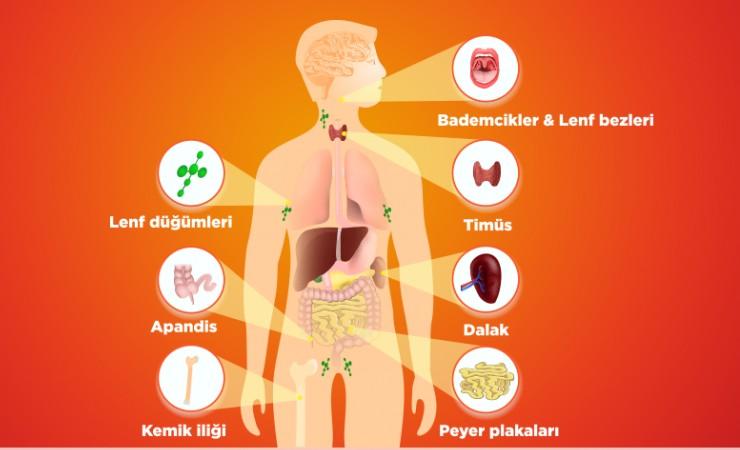 h51Wsv1 Bağışıklık Sistemi Nedir ve Nasıl Güçlendirilir?